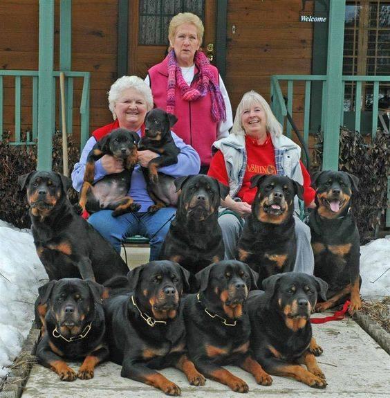 Family photo  -training.doggie-desire-