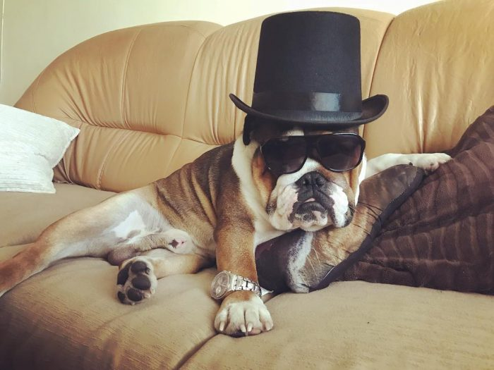 Godfather today  IG:pablothebulldoglove
