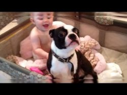 A Mom Told The Dog To Get Out Of Her Baby's Crib – But The Terrier Gave Her Nothing But Trouble