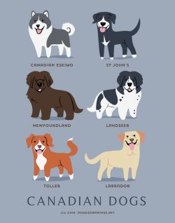 Browse Our List Of 192 Dog Breeds To Find The Perfect Dog Breed For You