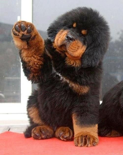 give me a paw