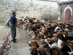 Crazy feeding frenzy.Watch 120 dogs at Dinner