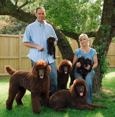 A poodle family