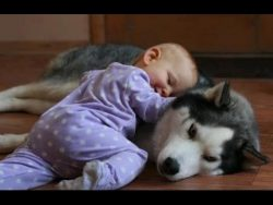 (86) Funny Dogs and Babies Playing Together – Cute dog & baby compilation – YouTube