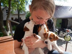 12 Horrifying Things You Didn't Know About Jack Russells