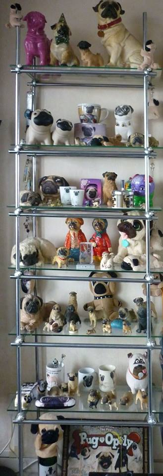 pug lover and collector