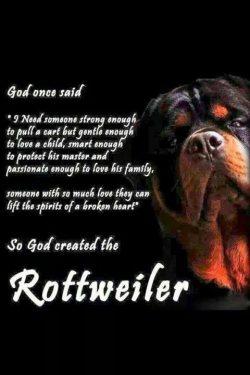 credit @rottweiler_pics