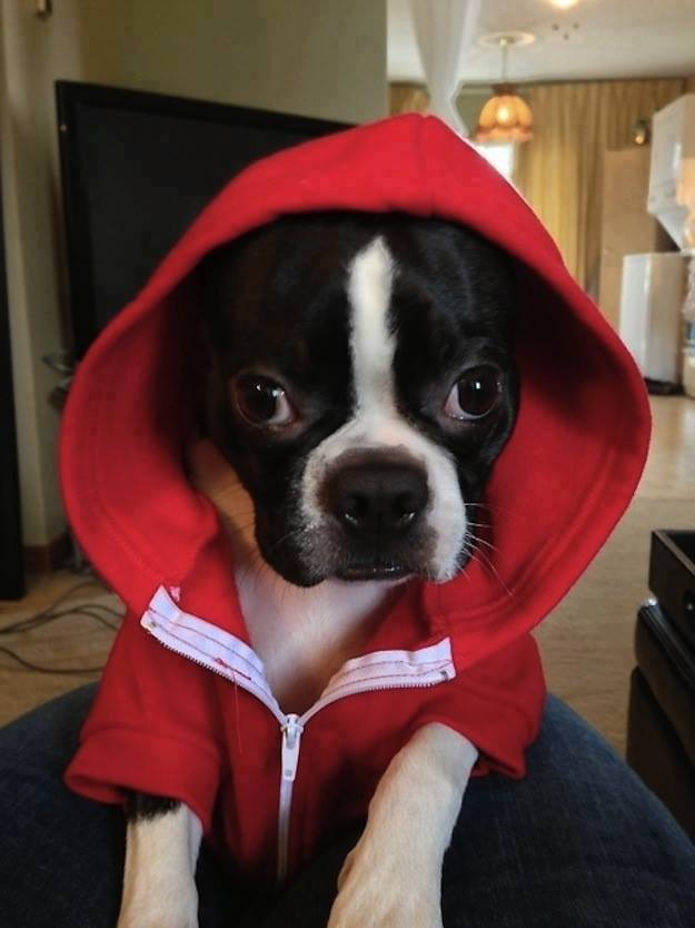 paw in the hood
