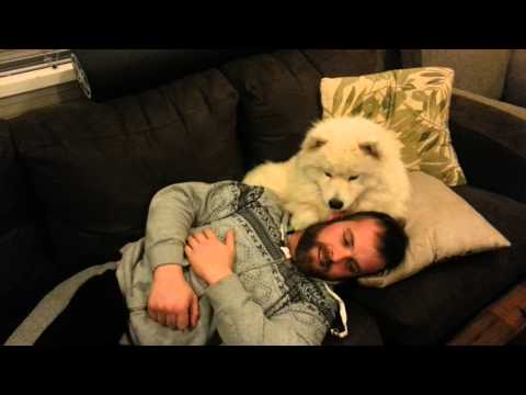 Dog Asks Permission To Cuddle In The Most Adorable Way Possible!