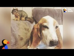Dog Rescues Baby Squirrel And Makes Him His Brother