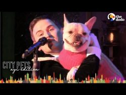 French Bulldog and Dad are NYC Broadway Stars