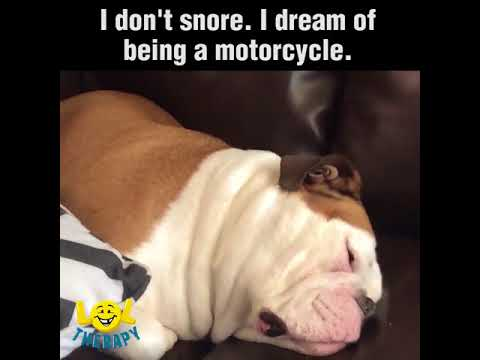 I don't snore, I dream of being a motorcycle