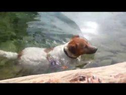 Jack Russel Cindy's Sonntags-Badeplausch