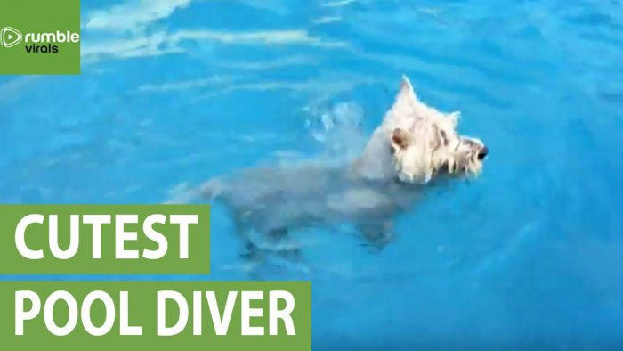 Little dog goes swimming on vacation