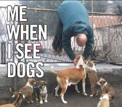 when i see dogs