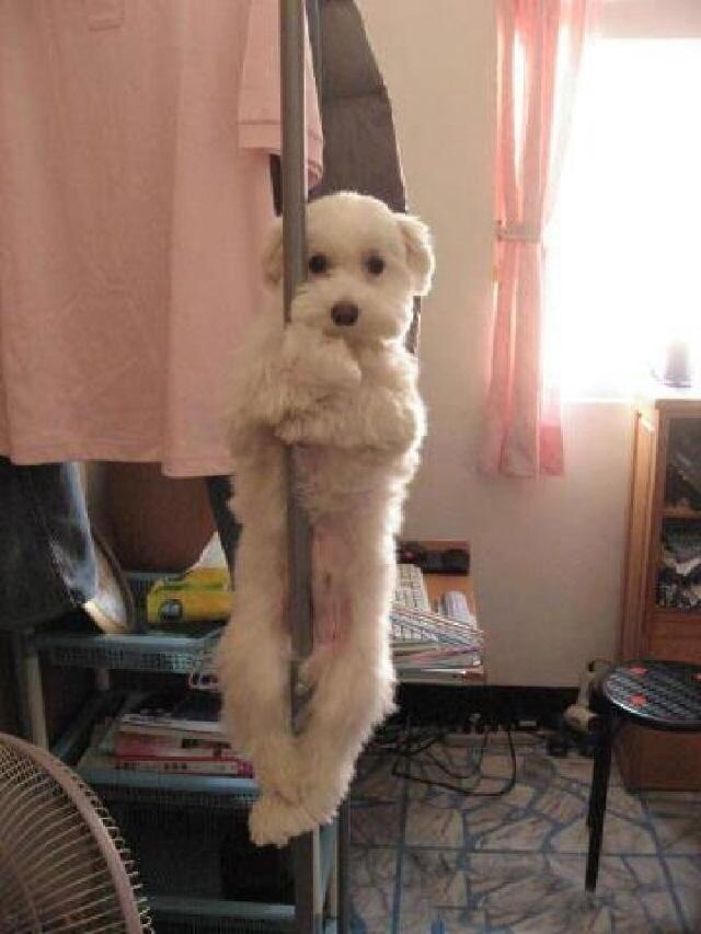 If you tell me you've seen a better photo of a dog pole dancing today, you're lying. ...