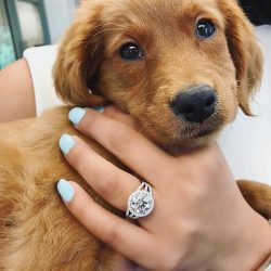 "PureWow Weddings 💍👰🏻 on Instagram: ""Would you choose the puppy or the ring?! 📷 @joeescobardiamonds"""