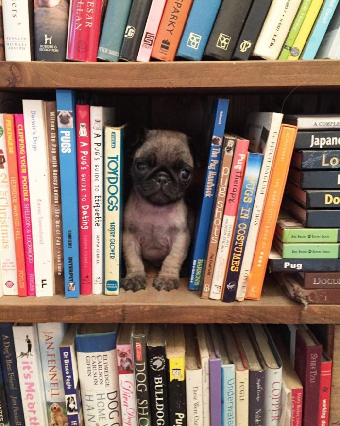 """""""Throwback to baby Oreo's first shelfie! 🙈💕🐶"""
