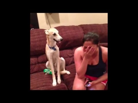 very Funny Dogs