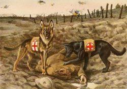 German Shepards Dogs Service ·