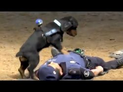 (3) Madrid Police Dog Performs CPR On Officer – YouTube