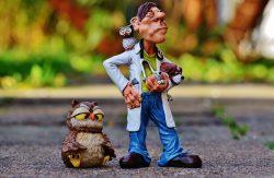 Veterinarian Owl Animals