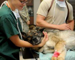 Veterinary Clinic Veterinarian