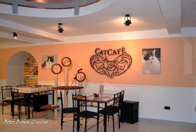 """""""Cat Café"""", Budapest"""