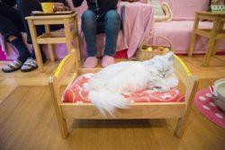"""""""Cat Cafe"""", Tokyo –"""