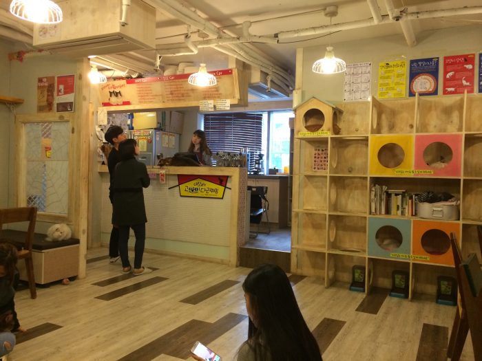 "Godabang Cat Café"", Seoul –"
