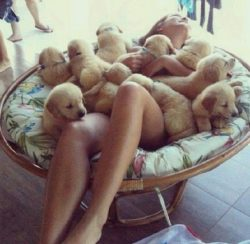 Heaven of pets