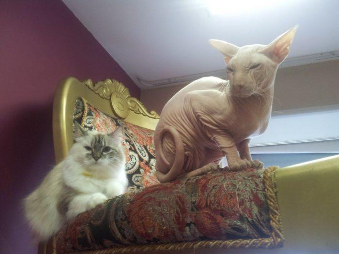 """Republic of Cats"", St. Petersburg –"