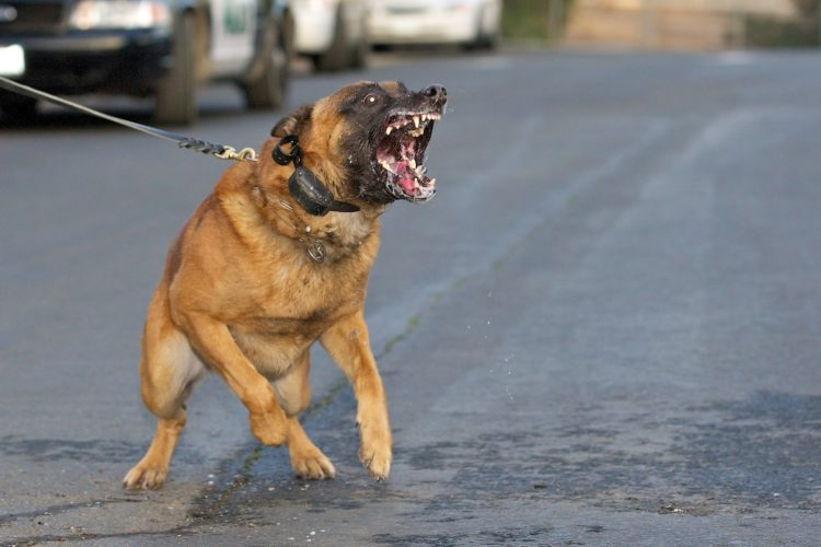 World's Most Dangerous Dog Breeds – Thedelite