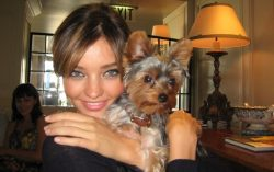 20 Celebrities With Yorkies