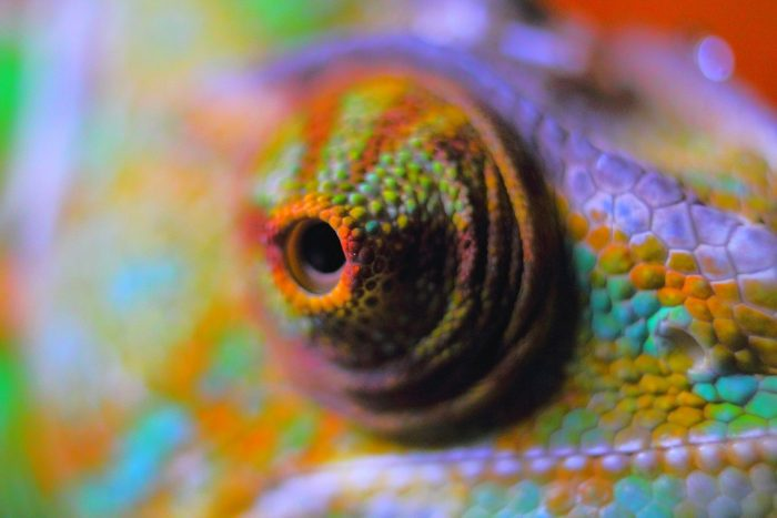 Chameleon Abstract