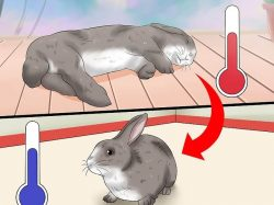 Heat stroke rabbit