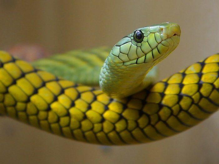 Snake Green Toxic Close ·