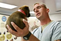 Vet Dog Images