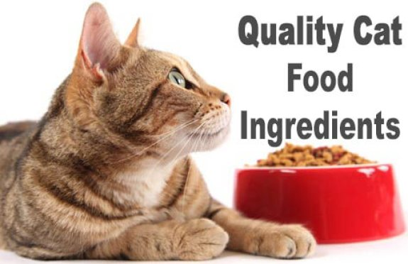 Food Ingredients CAT