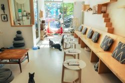 KitTea Cat Cafe – San Francisco, California