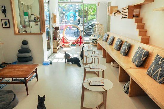 KitTea Cat Cafe – San Francisco, California