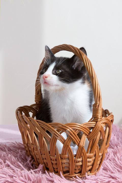 Kitten Pets Animals