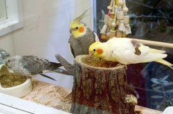 Kotori Bird Cafe – Omotesando, Tokyo