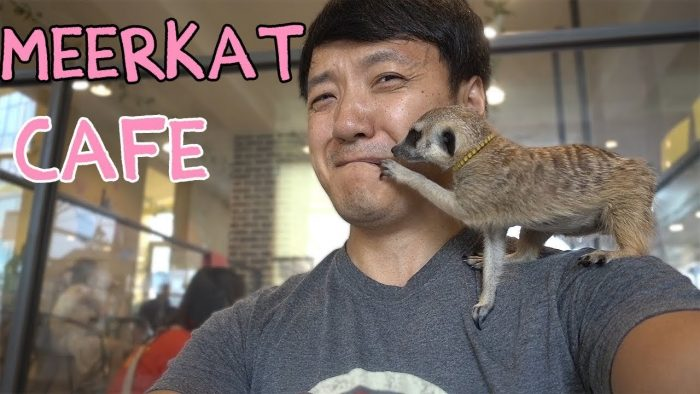 Meerkat Cafe – Seoul, South Korea – Google Search