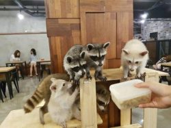 Meerkat Cafe – Seoul, South Korea