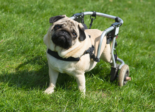 What to do Before Adopting a Special Needs Pet