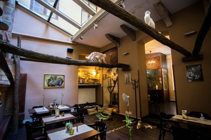 Zoo Cafe Budapest, Hungary –