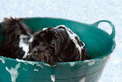 Puppy Bath Foam