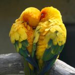 <p>5 Facts About Lovebirds-By Digby Bodenham writing for ExoticDirect pet insurance &#8211; BuzzSharer.com</p>