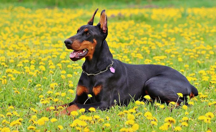 5 Low Maintenance Dog Breeds for Couch Potatoes – BuzzSharer.com